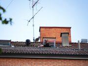 Katt räddad från tak