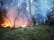 Brand i Vilstaskogen